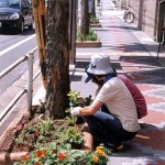花の苗の植え替え 原南商店街
