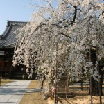 桜満開!! お花見で気分もすっきり