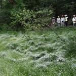 白玉星草と八丁トンボを守る島田湿地の会