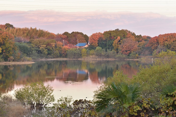 今朝の荒池